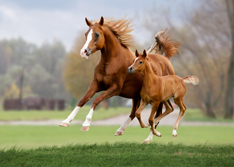 Pharmox Dr. Horse Gelenk
